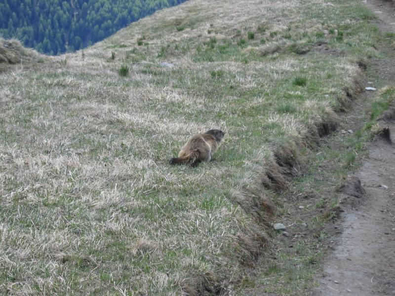 Bichl - Sajathütte - Bichl