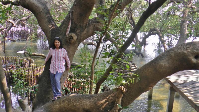 Mangroven-Park