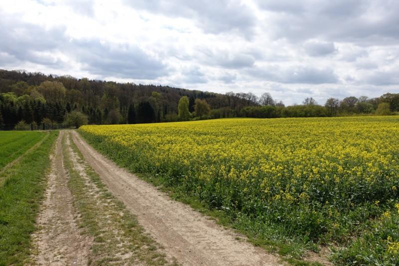 Traumpfad Koberner Burgpfad (Start Wolken)